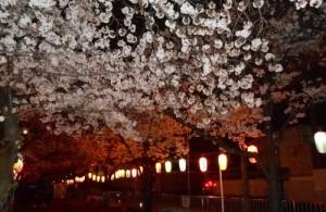 夜桜 002